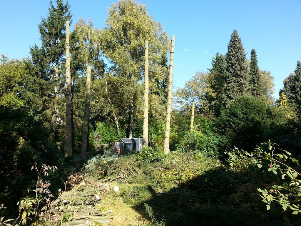 Das gesamte Nachbargrundstück ist mit Zweigen und Ästen bedeckt