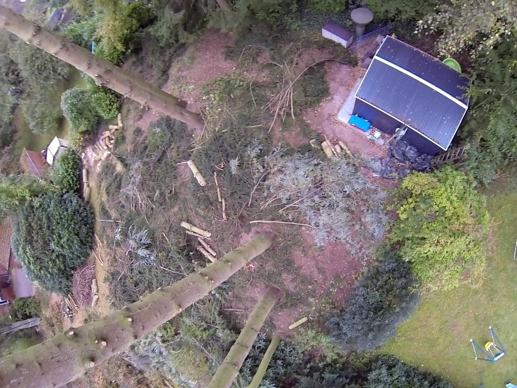 In der Luftaufnahme erahnt man, wie groß die Tannen waren (Foto vom Quadrocopter)